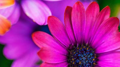 flower-tribute gifts mahaska health foundaiton link